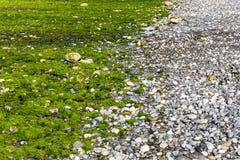 Морская водоросль береговых пород дневная стоковое фото