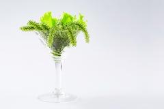 Морская водоросль виноградин моря в стекле коктеиля Зеленая икра, на белой предпосылке Стоковые Изображения RF