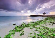 Морская водоросль в пляже Sanur, Бали Стоковые Изображения RF