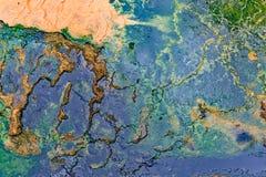Морская водоросль и бактерии Стоковое Изображение