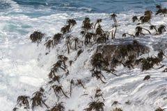 Морская водоросль и волны Стоковая Фотография RF