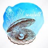 Морская водоросль и раковина с жемчугом Стоковое фото RF