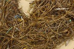 Морская водоросль Корнуолл Стоковые Изображения