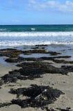 Морская водоросль на корнуольском пляже Стоковые Фотографии RF