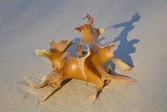 Морская водоросль на пляже Стоковая Фотография RF