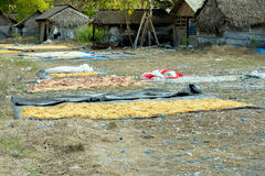 Морская водоросль обрабатыванная землю по побережью Nusa Penida Стоковое Фото