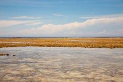 Морская водоросль пляжа Ritidian в Гуаме Стоковое Изображение RF