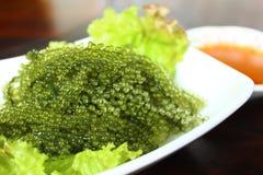 Морская водоросль lentillifera Caulerpa вид зеленого цвета bryopsidale Стоковая Фотография