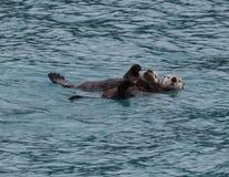 Морская выдра и щенок Стоковое Фото