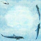 морская живая природа обоев Стоковые Фото