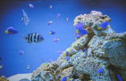 Морская жизнь: экзотический тропический коралловый риф Стоковые Изображения RF