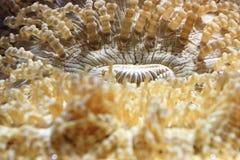 Морская жизнь Стоковая Фотография RF