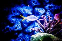 Морская жизнь Стоковые Фотографии RF