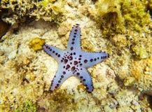 Морская звезда на дне Подводное фото Тропический seashore Коралловый риф и голубые морские звёзды Стоковые Фотографии RF