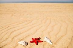 Морская звезда на песчаном пляже Стоковые Фото