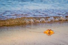 Морская звёзда лежит на влажном песке на пляже стоковое фото rf