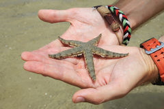Морская звёзда на ладонях рук Стоковое Изображение
