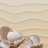 Морская предпосылка с seashells на песке. Стоковое фото RF