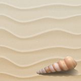 Морская предпосылка с seashells на песке. Стоковое Изображение RF