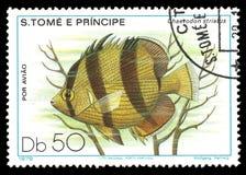 Морская фауна, соединенная рыба бабочки Стоковое Изображение RF