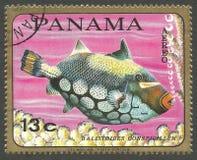 Морская фауна, Triggerfish клоуна Стоковые Фото
