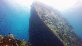 Морская флора и фауна в рифе сток-видео