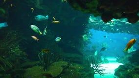 Морская флора и фауна в oceanarium Лиссабона, Португалии сток-видео