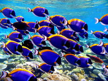 Морская флора и фауна Стоковое фото RF