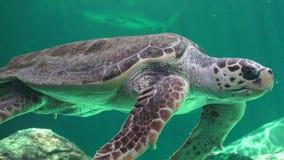 Морская черепаха и другие морские животные Стоковая Фотография RF
