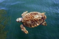 Морская черепаха морской черепахи в море стоковые изображения