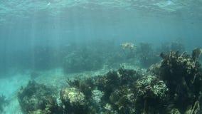 Морская черепаха. видеоматериал