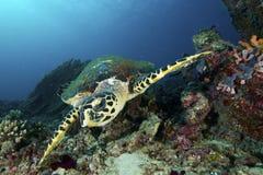 Морская черепаха Стоковые Фото