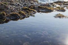 Морские бассейны на утесах с морской водорослью морем стоковые изображения rf