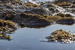 Морские бассейны на утесах с морской водорослью морем стоковое фото rf