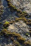 Морские бассейны на утесах с морской водорослью морем стоковое изображение rf
