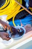 Морские ежи отверстия на boatside Стоковое Изображение RF