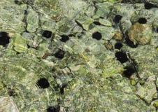 Морские ежи Стоковые Изображения RF