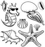 Морские животные и собрание раковин Стоковые Изображения RF