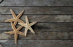 Морские звёзды в деревянном стоковое изображение