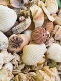 Морские звёзды, жемчуга, и изумляя seashells стоковая фотография