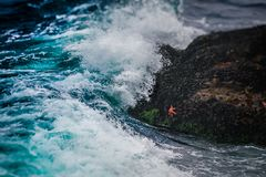 Морские звёзды и волна стоковое фото rf