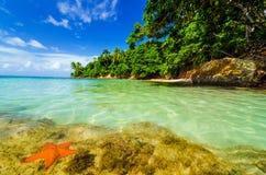 Морские звёзды и зеленый остров стоковое фото