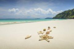 Морские звёзды и раковины на красивой тропической предпосылке пляжа с стоковое фото rf