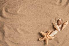 Морские звёзды и раковины с песком как предпосылка текстура песка предпосылок идеально Стоковая Фотография RF