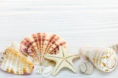 Морские звёзды и seashells различного размера на белом деревянном backgro Стоковые Фото