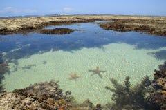 Морские звёзды лежат в соленой воде бирюзы Индийского океана стоковые фотографии rf
