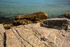 Морские звёзды на береге на утесах в солнечной погоде стоковое изображение