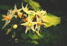 Морские звёзды на дереве стоковые фото