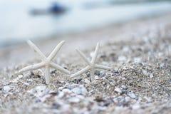 Морские звёзды на песочном summerbeach с Стоковое Фото