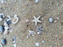 Морские звёзды, раковина, море, пляж стоковые фото